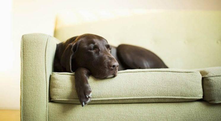 Ali veš, koliko časa (najdlje) je varno pustiti psa doma samega?