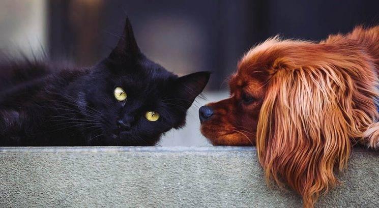 Razkrita glavna razlika med ljubitelji mačk in ljubitelji psov