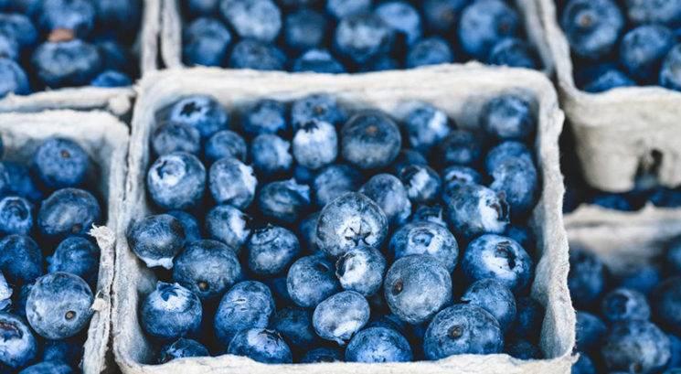 Borovnice: Zakaj bi jih morala jesti več in bolj pogosto