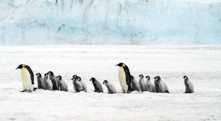 Moraš videti! O tej četici pingvinčkov na šolski ekskurziji govori cel svet