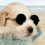 Ali lahko psa opeče sonce?