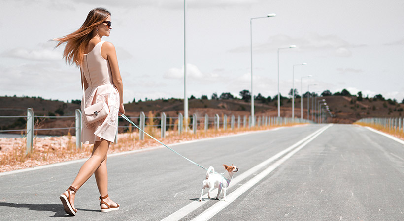 Kako veš, da je zunaj prevroče za varen sprehod s psom