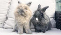 Prisrčne živali, ki bi jim vsekakor morala slediti na Instagramu