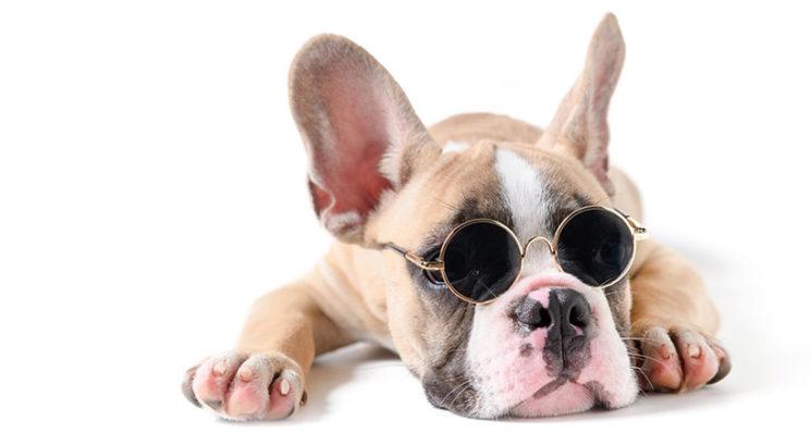 Ali se psi potijo, ko jim je vroče?