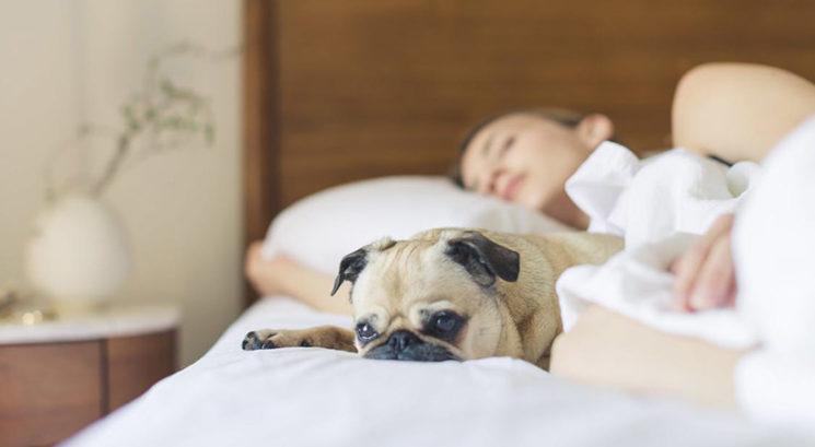 Se lahko psi nalezejo in prenašajo koronavirus?